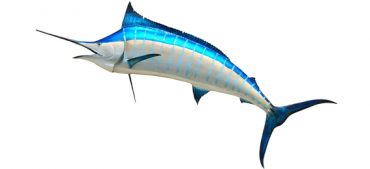 What Is the Fastest Fish in the Ocean?