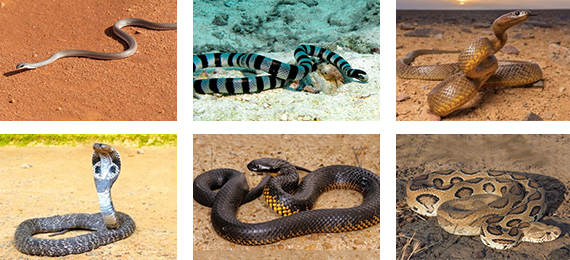 What Are the Top 6 World's Deadliest Snakes