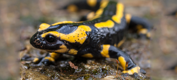 5 Interesting Facts about Salamanders