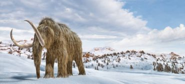 5 Fascinating Facts about Woolly Mammoths
