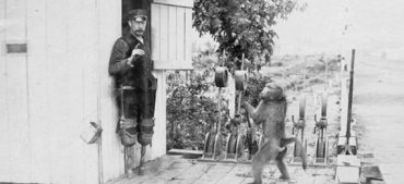 Did a Baboon Work as a Railroad Signalman?
