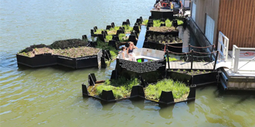 Floating Gardens of Rotterdam