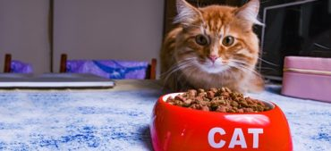 How Often Should You Feed Your Cat?