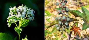 Can You Identify These Poisonous Plants?