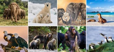The Most Extraordinary Wildlife Experiences in the World