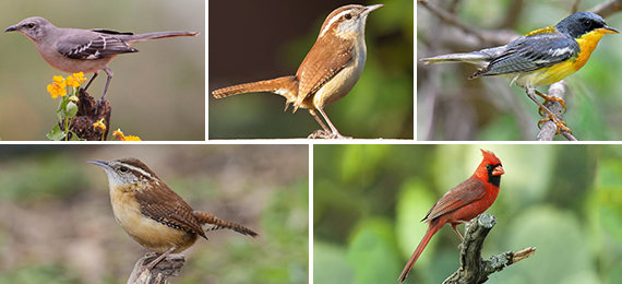 Can You Answer Our Texas Birds Identification Quiz?