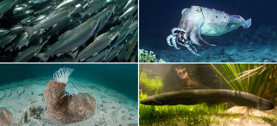 Ocean animals with superpowers