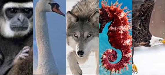 The Top 5 Monogamous Animals in the Animal Kingdom
