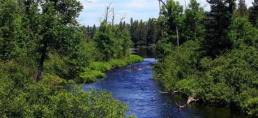 Can You Score 15/15 in This Superior National Forest Quiz?