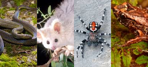 Top 7 Newly Discovered Species 2020