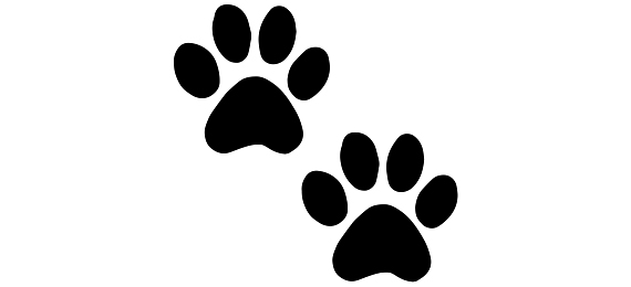 Can You Pass This Animal Tracks Quiz?