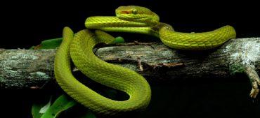 Meet This New Species Salazar Slytherin Snake
