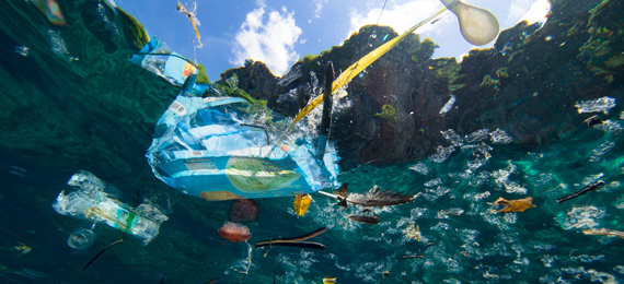 Fascinating Facts on the Great Pacific Garbage Patch