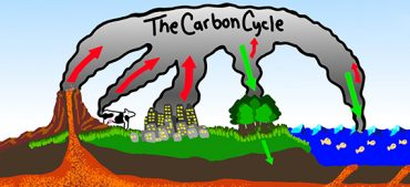 Carbon Cycle and Its Process