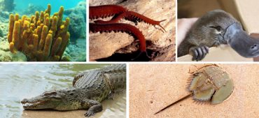 Top 5 Oldest Living Species on Earth