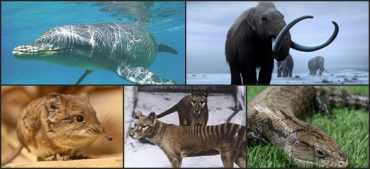 The 5 Surprising Animals That Came Back from Extinction