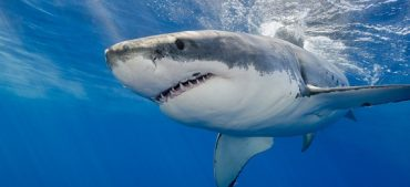 Amusing Facts about Shark Teeth That You Can't-Miss