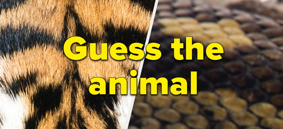 Guess These Animals