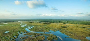 15 Everglades Facts You Ought to Know