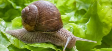13 Interesting Facts about a Snails Lifespan