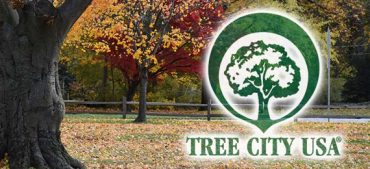 4 Rules to Become a Tree City in the USA