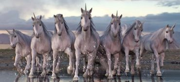 What Is a Group of Unicorns Called? Uncover Fun Facts
