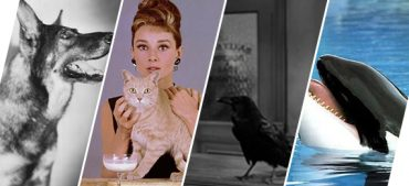 Do You Know the History of Animals in the Movies?