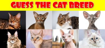 """Can You Score 10/10 in Our """"Identify the Cat Breed"""" Quiz?"""