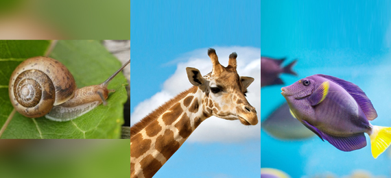 Interesting Facts about Animals That Don't Make Noise