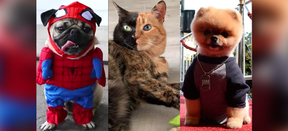 Guess the Most Followed Pet on Instagram