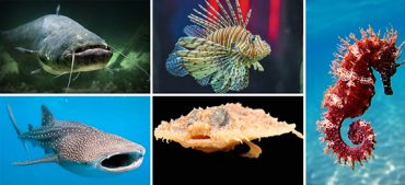 Do You Know Why Fish Are Named after Other Animals?