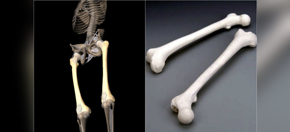 Is It True That Human Thigh Bones Are Stronger than Concrete?